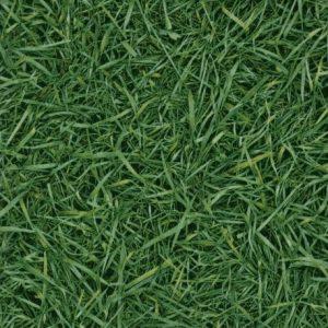 tyle Grass 25
